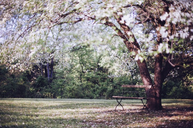 public-domain-images-free-stock-photos-tree-blossoms-bench-1-1000x666